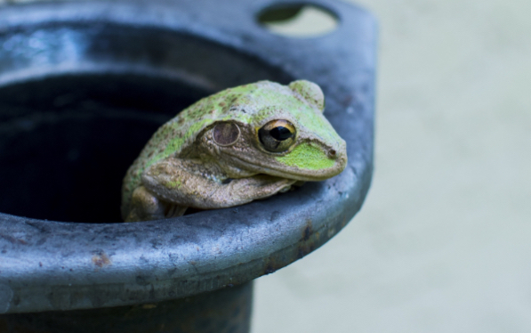 A frog climbing out of a bucket
